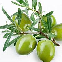 оливки и их свойства
